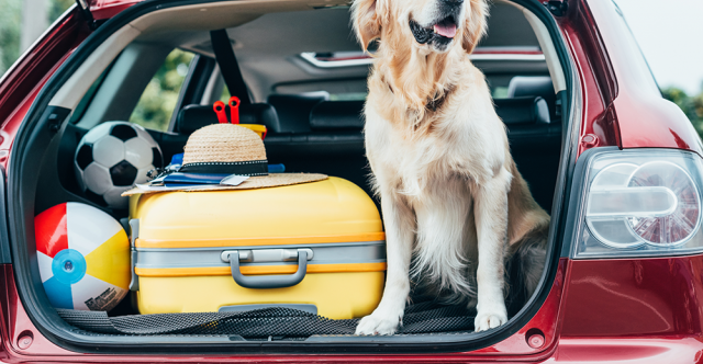 Things To Bring When Hitting The Road With Your Four-Legged Friend